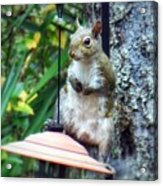 Squirrel Portrait Acrylic Print