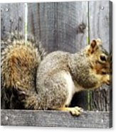Squirrel - Snack Time Acrylic Print
