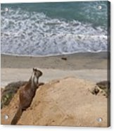 Squirrel Soaking In The Ocean View   Acrylic Print