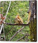 Squirrel Standoff Acrylic Print
