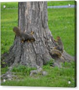 Squirrel Tag Acrylic Print