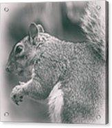 Squirrell Acrylic Print