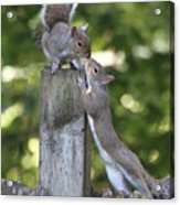 Squirrelly Affection Acrylic Print