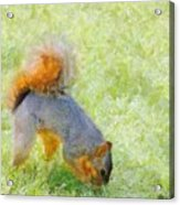 Squirrelly Acrylic Print