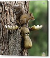 Squirrelly Thoughts Acrylic Print