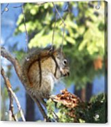 Squirrels Spring Meal Acrylic Print
