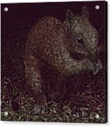 Squirrely Art Acrylic Print