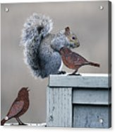 Squirrely Acrylic Print