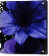 Squish Blossom Acrylic Print