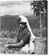 Sri Lanka Tea Plantation Acrylic Print