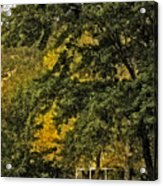 Seeing The Beauty In The Trees Acrylic Print