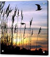 St Augustine Beach Sunset Acrylic Print