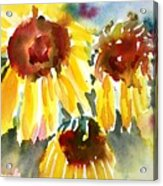 St. Charmand Sunflowers Acrylic Print
