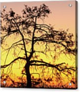 St Johns River Tree Acrylic Print