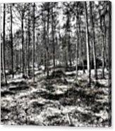 St Lawrence's Wood, Hartshill Hayes Acrylic Print