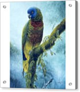 St. Lucia Parrot - Majestic Acrylic Print