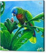 St. Lucia Parrot And Bwa Pain Marron Acrylic Print