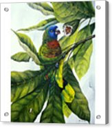 St. Lucia Parrot And Fruit Acrylic Print