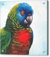 St. Lucia Parrot Acrylic Print