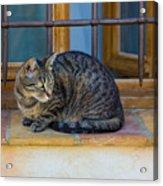 St Paul Cat Acrylic Print