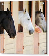 Stable Series  Acrylic Print