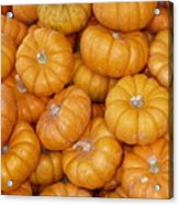 Stacked Mini Pumpkins Acrylic Print