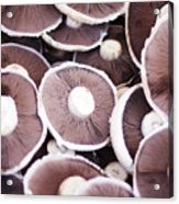 Stacked Mushrooms Acrylic Print
