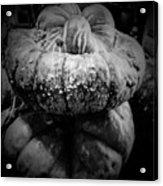 Stacked Pumpkins Acrylic Print