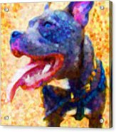 Staffordshire Bull Terrier In Oil Acrylic Print