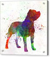 Staffordshire Bull Terrier In Watercolor Acrylic Print