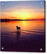 Staffordshire Bull Terrier On Lake Acrylic Print by Michael Tompsett