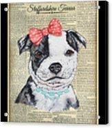 Staffordshire Terrier-jp3857 Acrylic Print