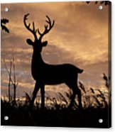 Stag 002 Acrylic Print