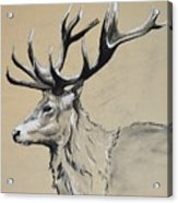 Stag  Acrylic Print