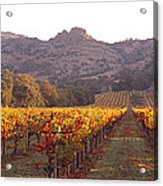 Stags Leap Wine Cellars Napa Acrylic Print