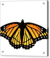 Stained Glass Wings Acrylic Print