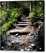 Stair Stone Walkway In The Forest Acrylic Print