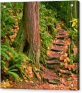 Stairway Forgotten Acrylic Print