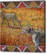 Stalking Cheetahs Acrylic Print