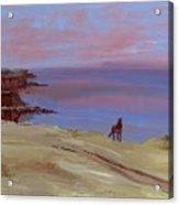 Stallion At Dingle Bay Acrylic Print