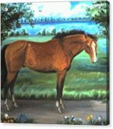 Stallion Portrait Acrylic Print