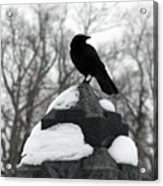 Crow Stance On Cold Stone Acrylic Print