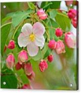 Stand Alone Japanese Cherry Blossom Acrylic Print
