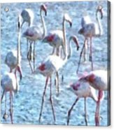 Stand Out In The Crowd Flamingo Watercolor Acrylic Print