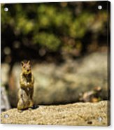 Stand Up Acrylic Print