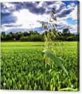 Standing Above The Crop Acrylic Print