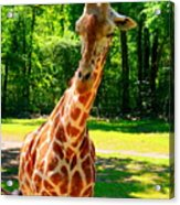 Standing Above The Rest Acrylic Print