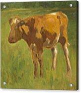 Standing Calf Acrylic Print