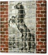 Standing Horse Acrylic Print