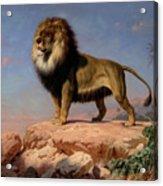 Standing Lion Acrylic Print